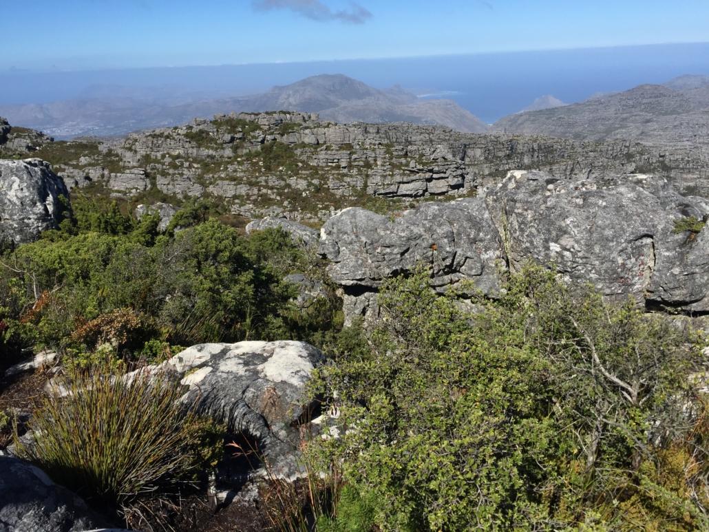 Table Mountain, wild Again