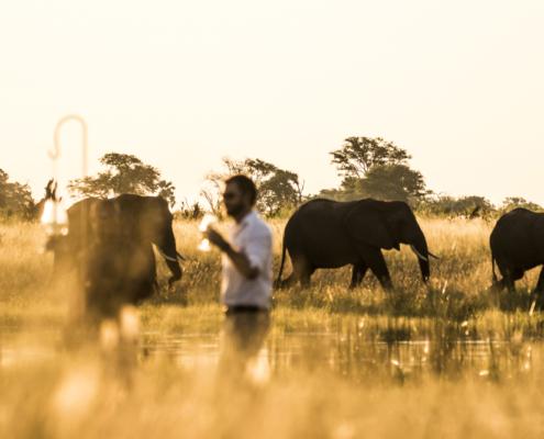 Abucamp - Botswana - Wild Again - Safari