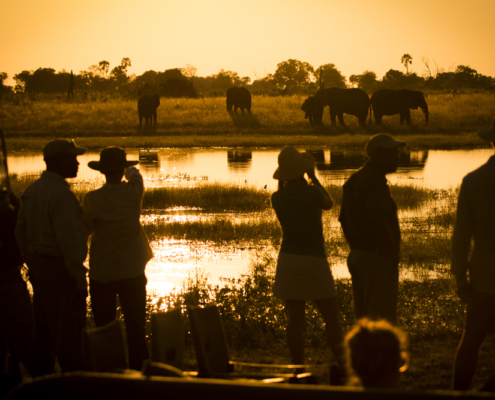 Abucamp - Botswana - Private Guides - Wild Again