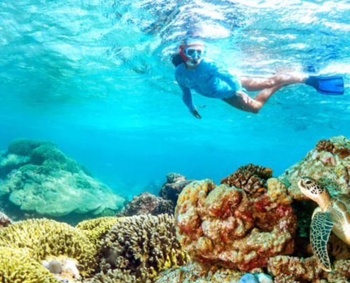 Alphonse Experience Island Activities - Private Guides - Sea Diving