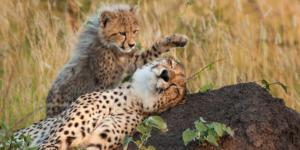 Best of predetors - Private Guides - Wild Again