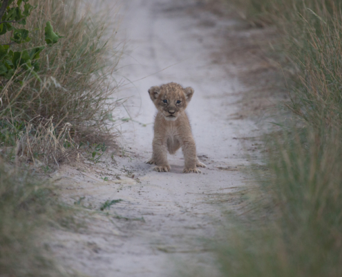 Botswana Private Guided Tours - Wild Again