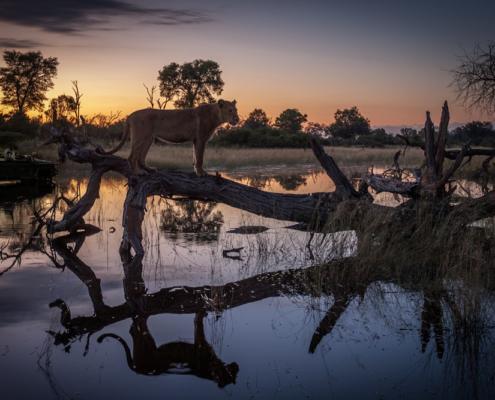 Chibate Wild life Safari - Private Guide - Wild Again_