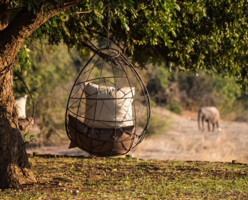 Chikwenya Lodge - Private Guides - Wild Again