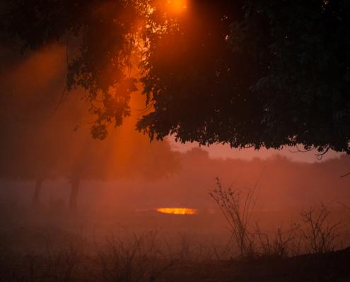 Chikwenya Sunset - Private Guides - Wild Again
