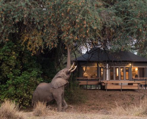 Chikwenya Wildlife - Private Guides - Wild Again