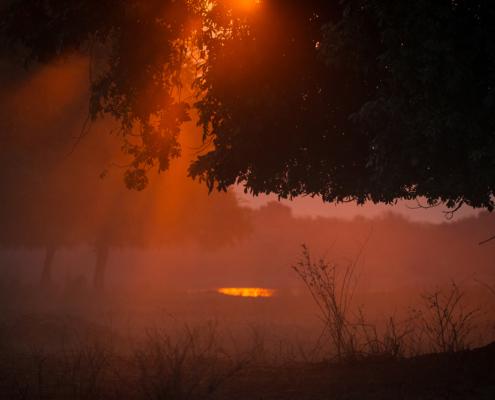 Chikwenya - Wildlife - Sunset
