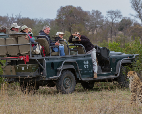 Londolozi - Wild Safari -Private Guides - Wild again
