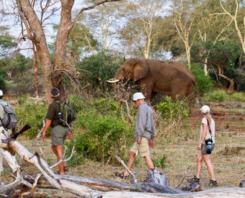 Pafuri - Safari - Wildlife - Private Guides