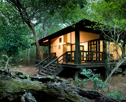 Phinda Forest Lodge - Private Guides - Wild Again