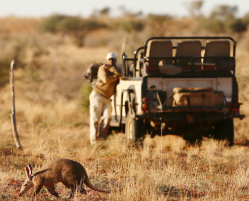 Safari - Wild Again - Private Guides