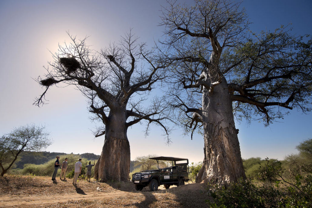 Pafuri Wild Again Wilderness Walking Retreat Baobab