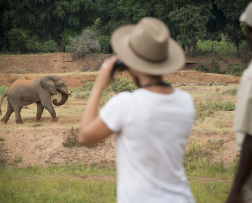 Pafuri Wild Again Wilderness Walking Retreat elephant