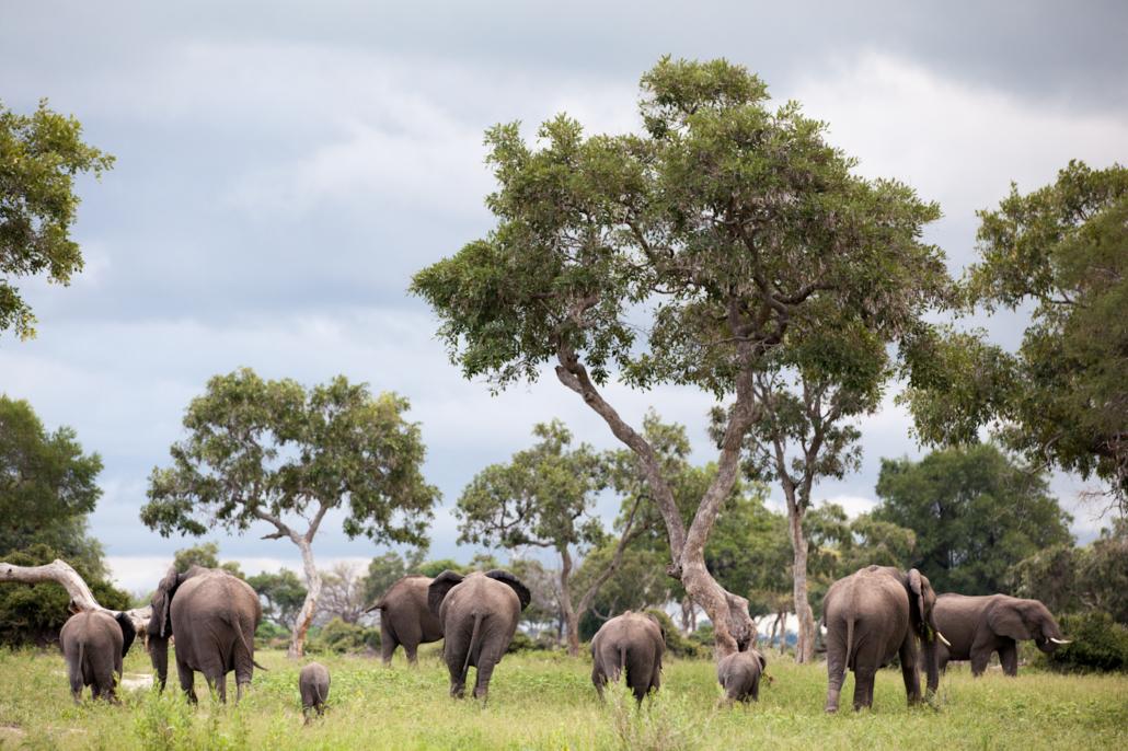 Elephants, Mombo, Botswana, Wild Again, Yin Yoga